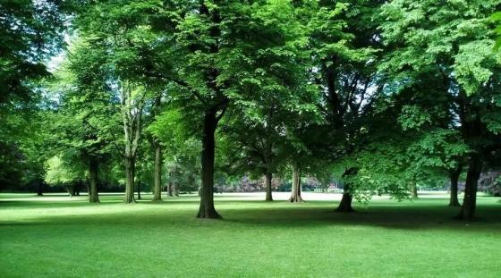 现代城市园林风景照片